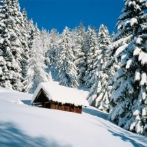 winter - inverno